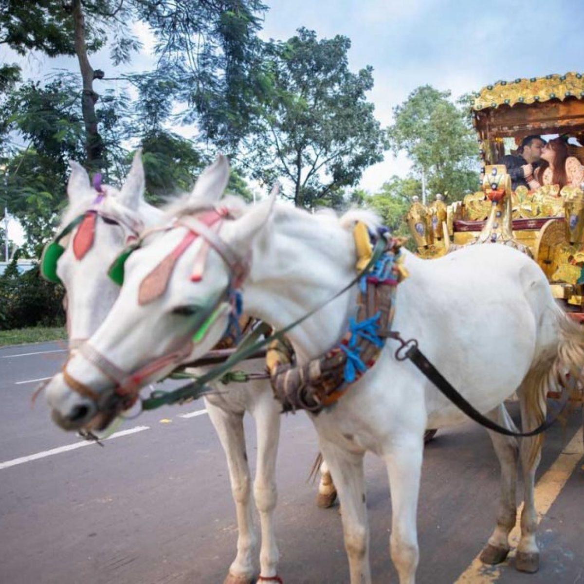 Heena & Dinesh_Pre Wedding (49)
